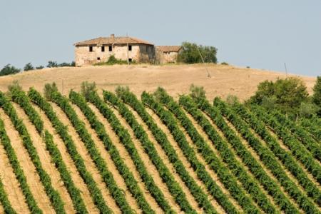 Česká půda: Jaké jsou ceny a co je ovlivnilo?