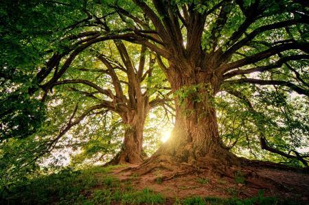 Kácení stromů v zahradách. V jakém období je možné stromy pokácet a kdy je potřeba povolení?